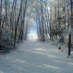 Traumhafte Fotos vom Winter
